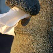 Moai Taschentuchspender Osterinsel