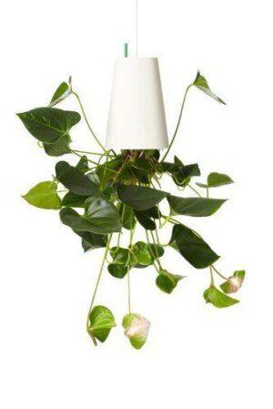 Sky Planter - origineller Blumentopf als Geschenk!