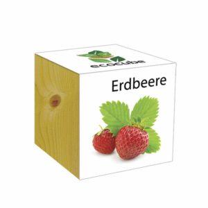 Erdbeer - Pflanze im Holzwürfel im Holzwürfel