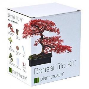 Ein Bonsai Pflanzset für 3 originelle Bonsaibäume