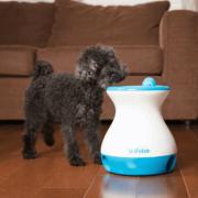 Ballwurfmaschine für Hunde