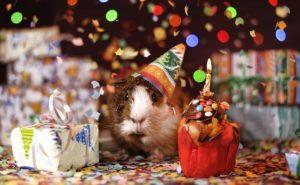 Geburtstagsparty zum 30sten Geburtstag