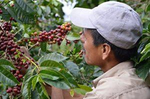 Plantage für Bio Kaffeebohnen