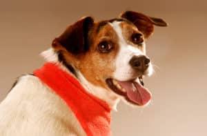 Fotoshooting für Hundebesitzer