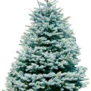 Weihnachtsbaum fürs Fest