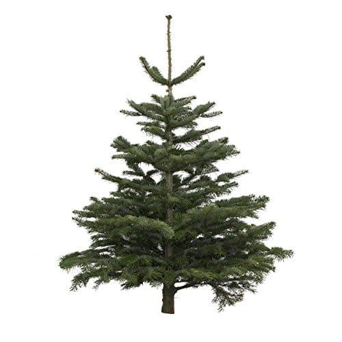 Jetzt Weihnachtsbaum kaufen!
