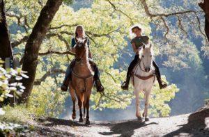 Erlebnisbox für Pferdenarren
