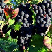 Weinprobe als Online-Event